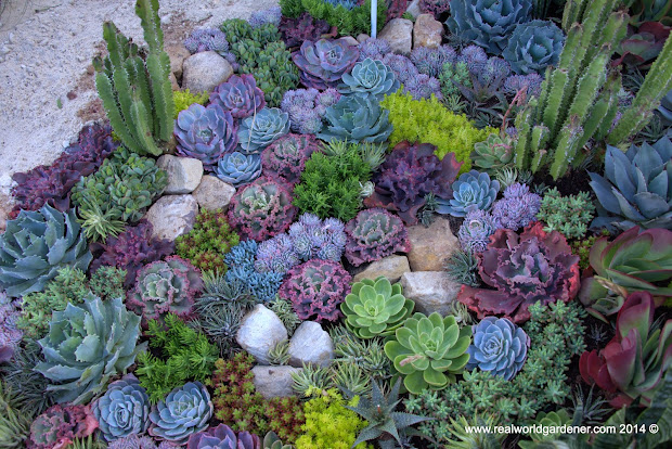 real world gardener nightjars