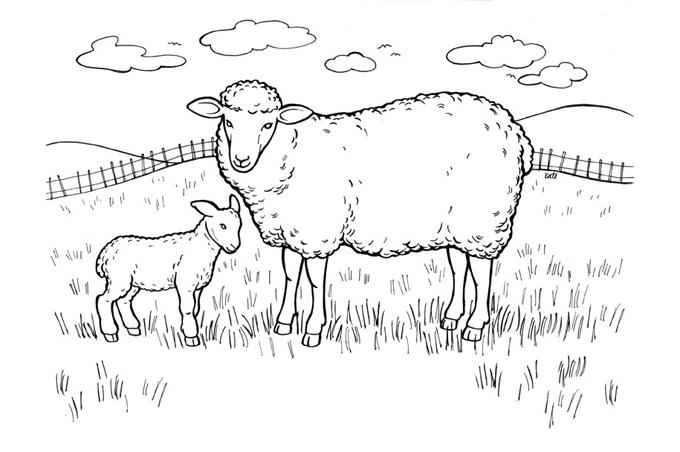 صورة خروف كبير وخروف صغير في المزرعة للتلوين