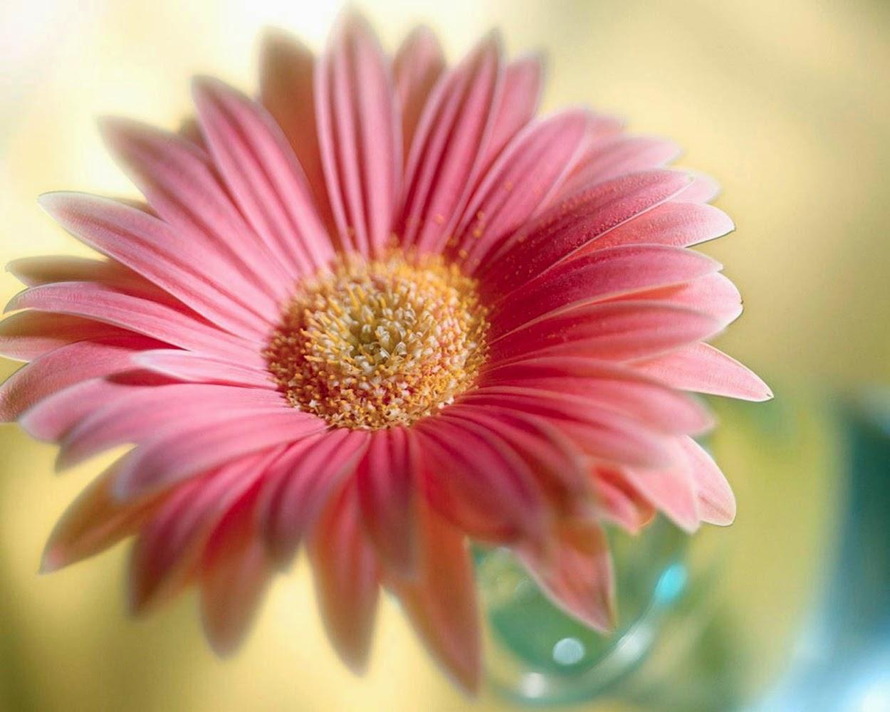 Flowers Desktop Wallpaper Many Flowers
