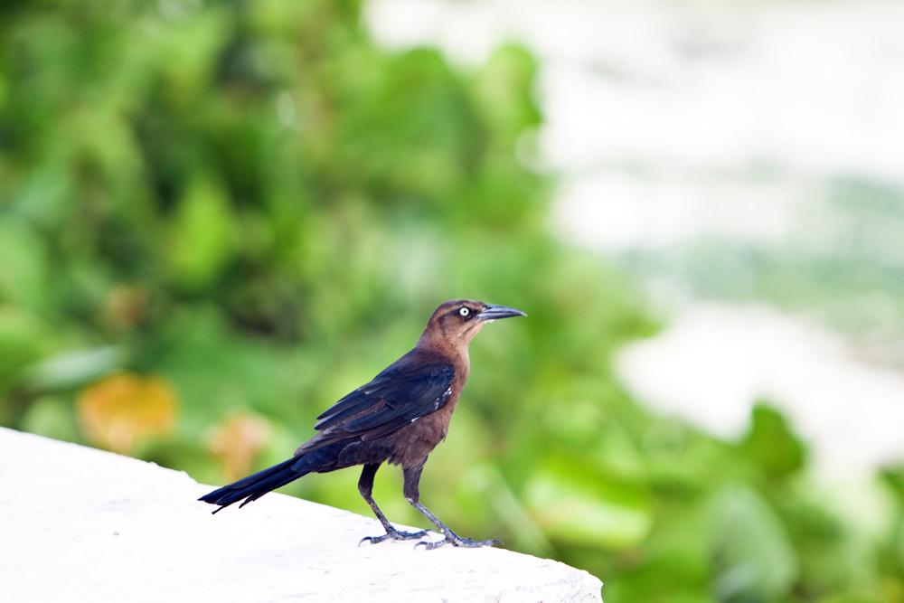 Birds At Cancun Mexico Quintana Roo Mexico