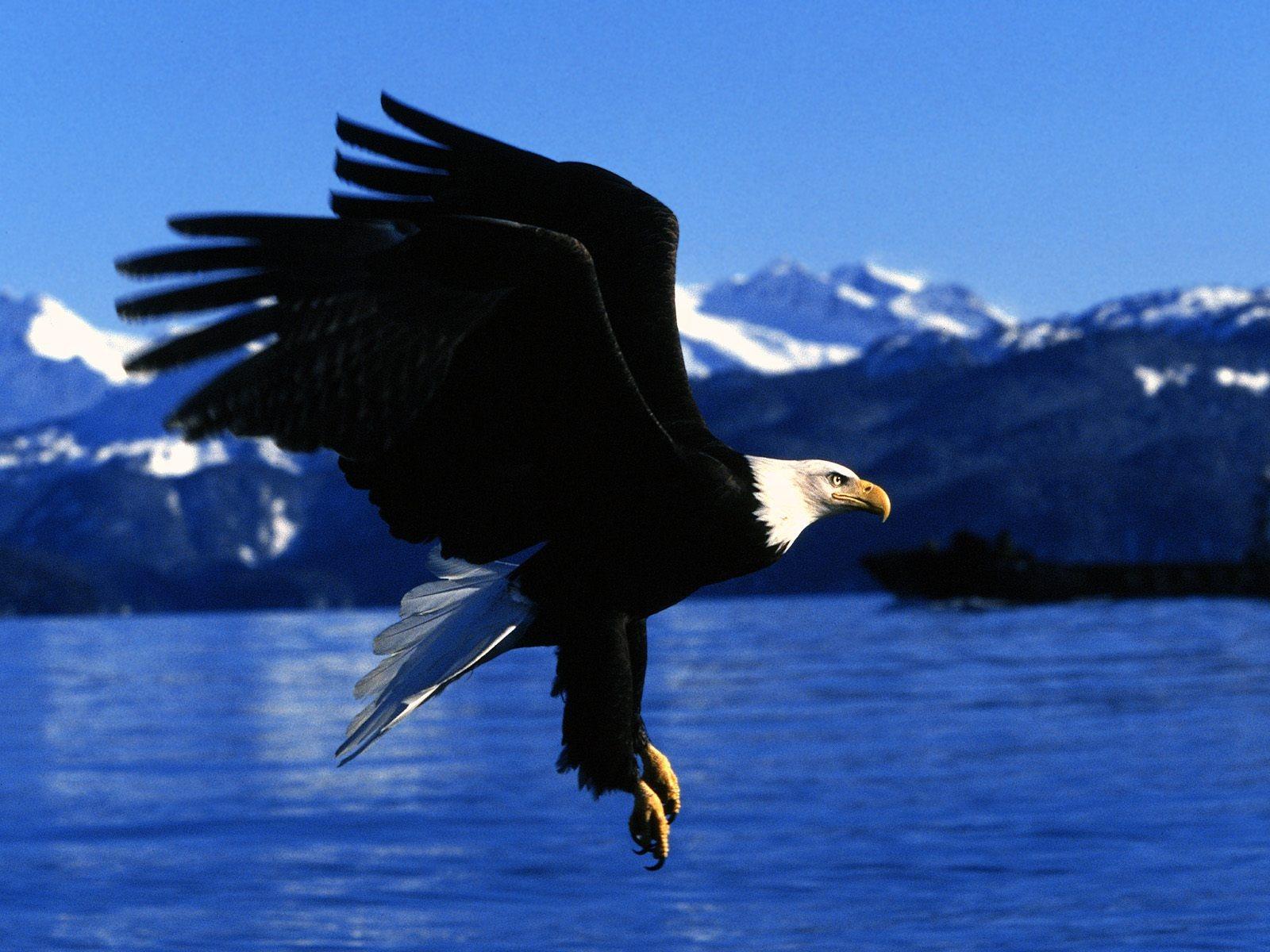 http://3.bp.blogspot.com/-5qJkHJErgoc/T4pf4Ih5F9I/AAAAAAAAB3w/NRo8qYJTkIo/s1600/Eagle+2012+Wallpapers+03.jpg