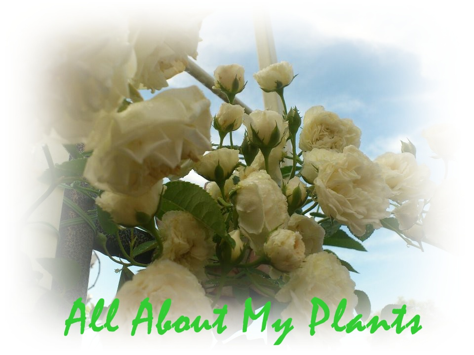 All About My Plant