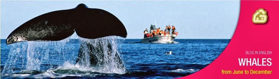 Valdes Peninsula  Whale Watching Argentine Patagonia Eco Hotel ----- Walvissen Schiereiland