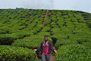 Tea Valley Cameron Highlands