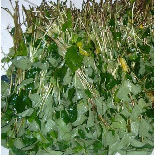 林媽媽酵素製作---魚腥草等十三種天然新鮮蔬果 - 林 ...