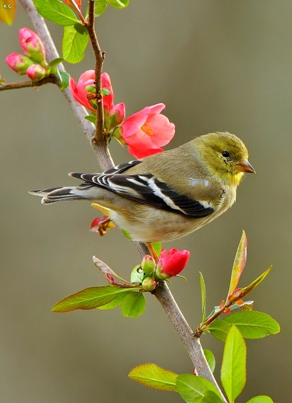 Beautiful Love Bird Images And HD Wallpapers Green Red Blue Yellow Tiny Little Birds Makes You Feel Wonderful Its Beauty Of Nature