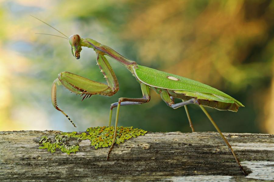 Huerto urbano insectos beneficiosos para el huerto for Insectos del jardin
