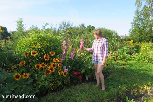 сад в августе, клумбы, рудбекия, гелениум, розы, гладиолусы, аленин сад,