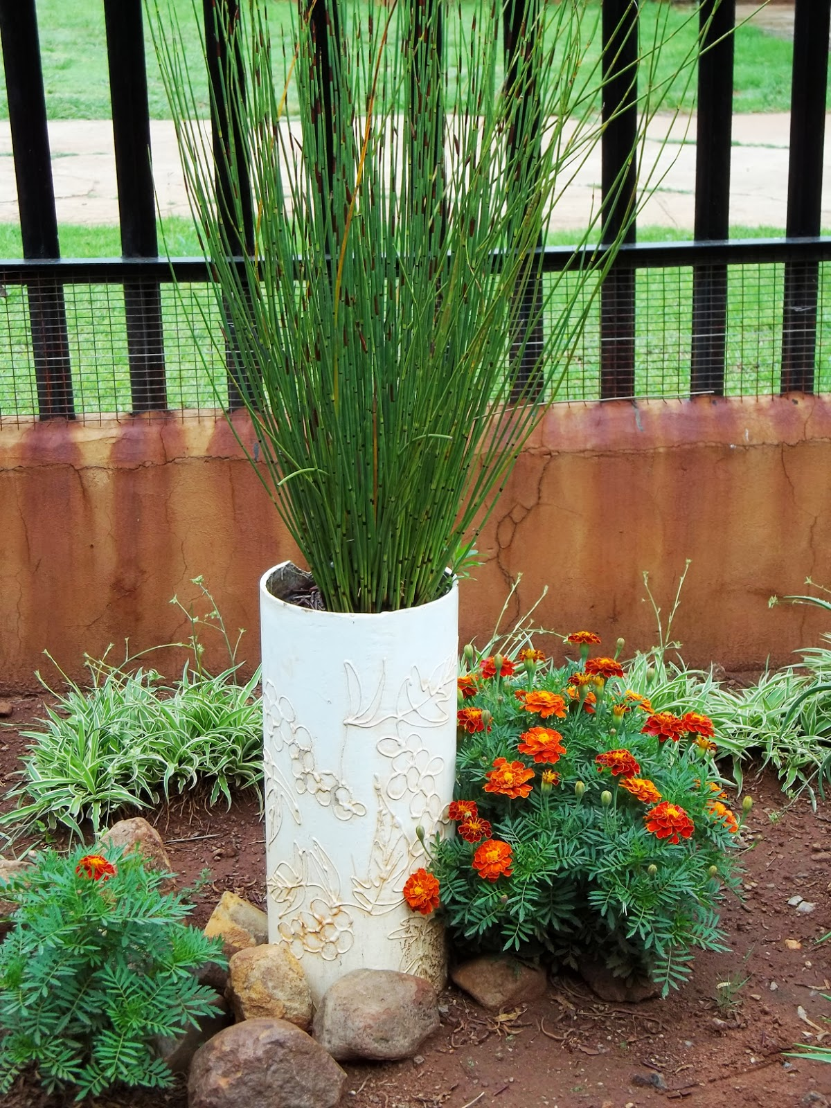 Gardening in africa ornamental grasses in the garden for Ornamental grass in containers for privacy