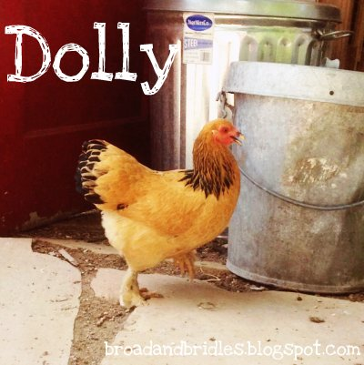 Dolly the Bantam