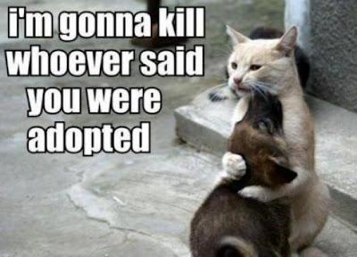 katze adoptiert hund