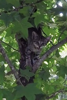 Image of kitten crying in tree.