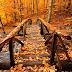 Piękno jesieni ♥