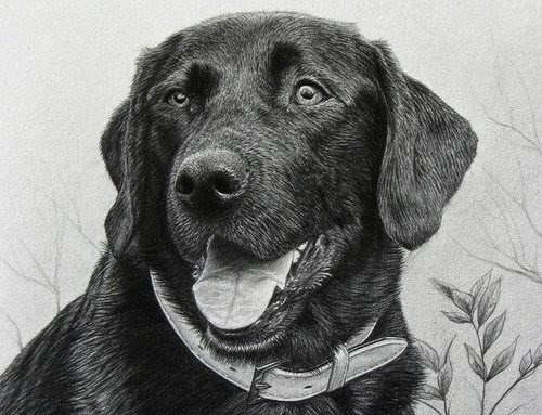 00-Charles-Black-Hyper-Realistic-Pencil-Drawings-of-Dogs-www-designstack-co