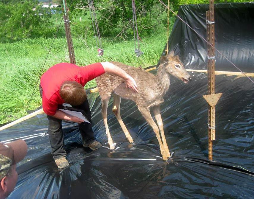 BORN-TO-TRACK BLOG: Hit Site Evaluation Seminars for Deer Hunters