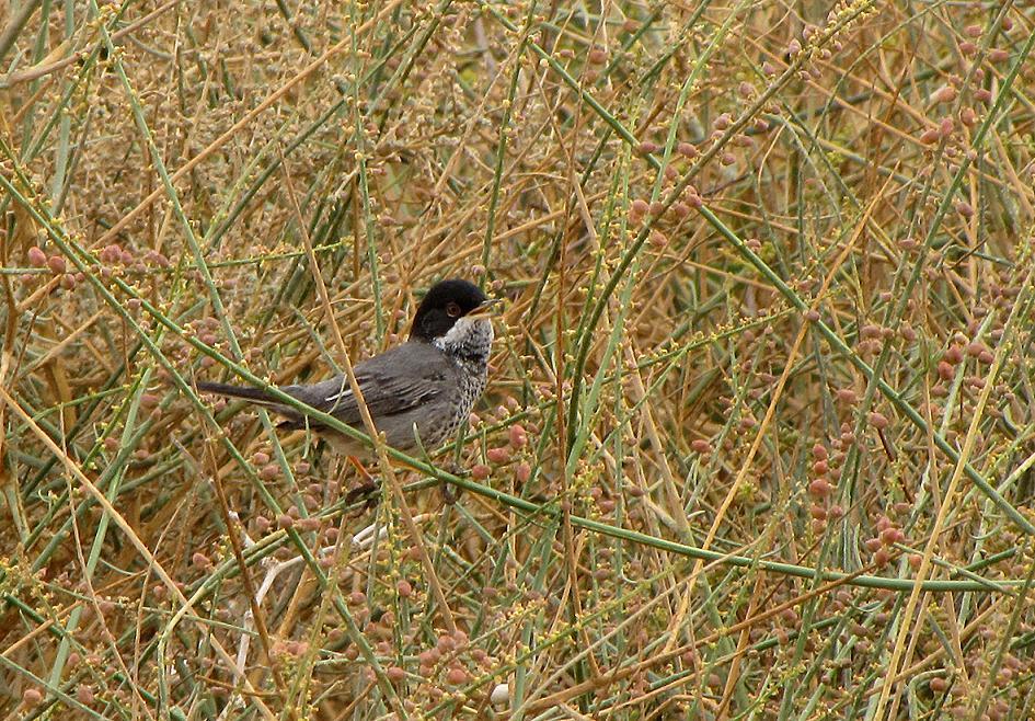 Eilat Birding: March 2012