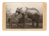 Jumbo éléphant