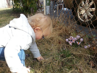 child in the yard