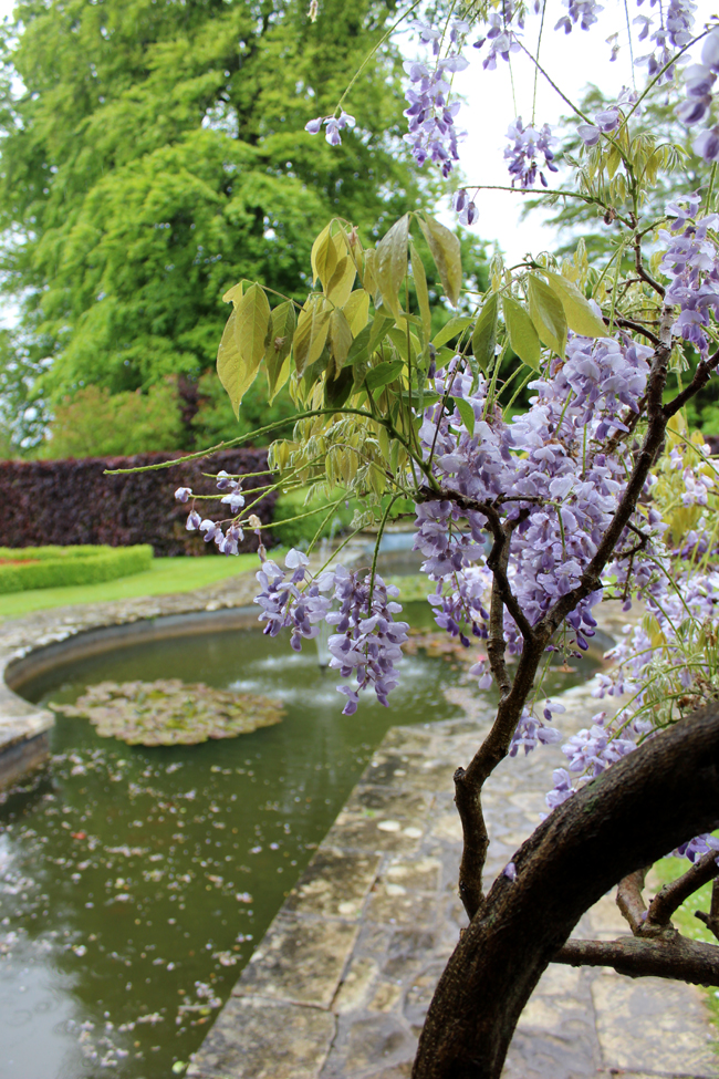 wisteria-rainy-day-kingston-maurward-pond-todaymyway.com
