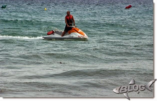 tiburon en cataluña