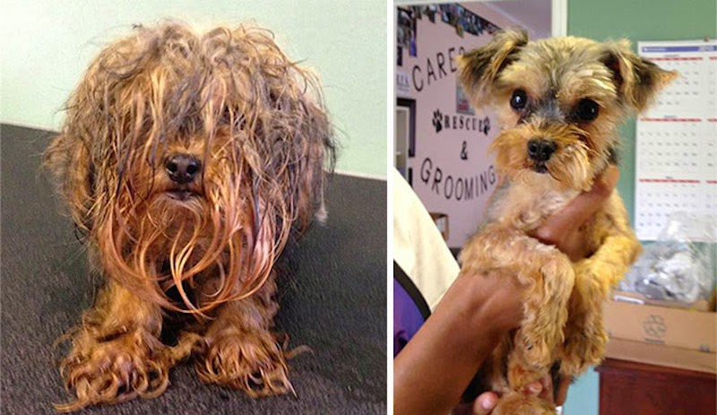 Boo - 16 Before-and-After Photos Of Rescued Dogs