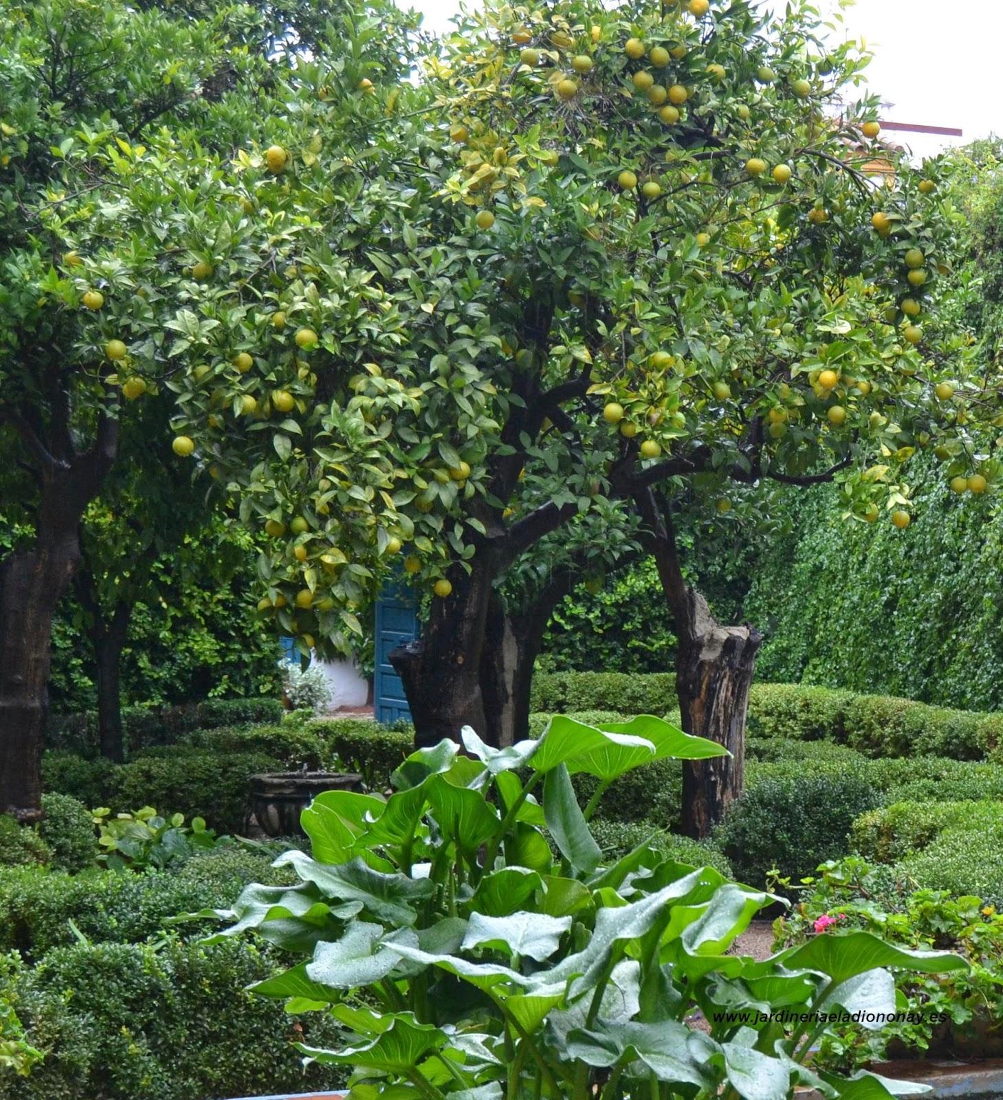 Jardineria eladio nonay decoraci n de espacios for Adornos de jardineria