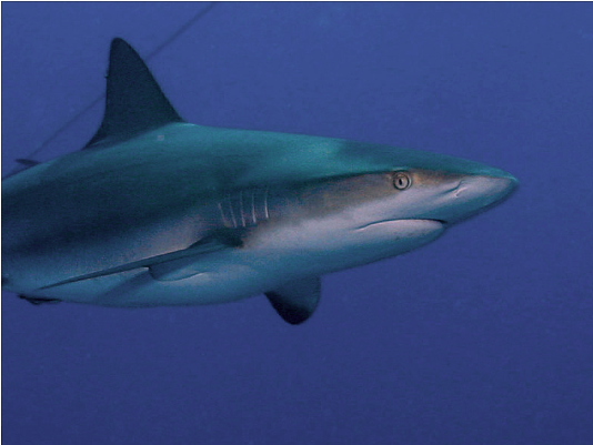 the diffference between sharks and dolphins Dolphins are a widely distributed and diverse group of aquatic mammals they  are an informal  in dolphins, and other marine mammals, there is no great  difference between the outer and inner environments  they have also been  seen protecting swimmers from sharks by swimming circles around the swimmers  or.