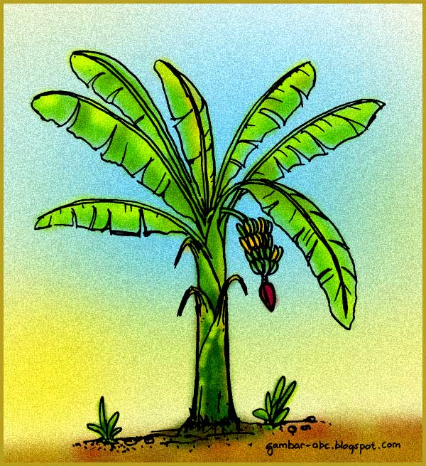 Mewarnai Pohon Pisang