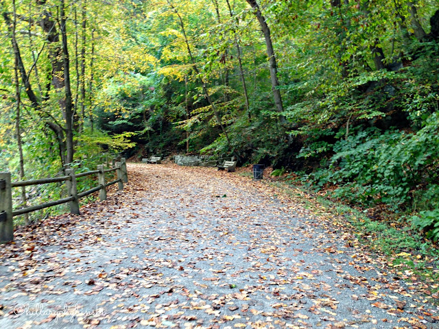 The Trail in Wissahickon Valley Park