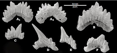 http://sciencythoughts.blogspot.co.uk/2014/01/deepwater-sharks-from-early-miocene-of.html