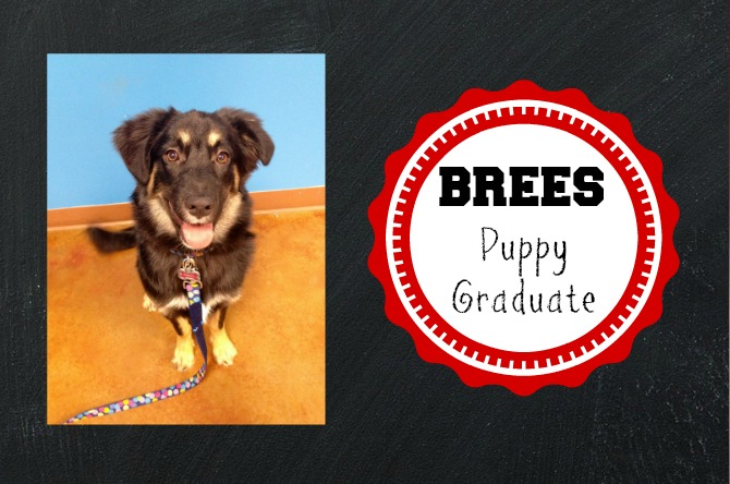 The Holland House: Brees the Puppy Graduate