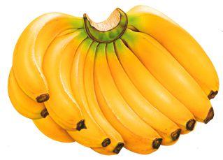 Macam macam pisang nama-nama jenis pisang gambar pisang