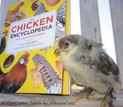 "According to Gail Damerow in The Chicken Encyclopedia, adding diatomaceous earth, wood ashes or lime-and-sulfur garden powder to their dust bath is hazardous to their respiratory health and should be avoided unless they are ""seriously infested"" with parasites. Even in that case, she writes, ""the benefit may outweigh the danger of TEMPORARILY adding such materials."" (p. 93 emphasis added)"
