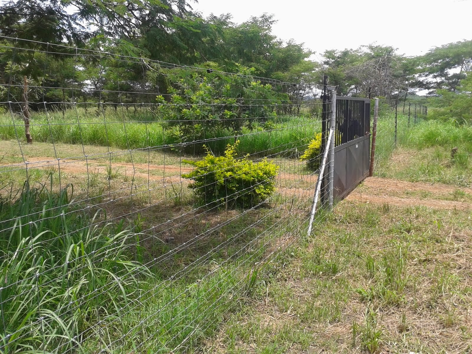 FARMS FOR SALE IN CHOMA