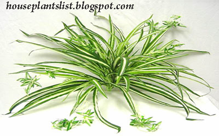 House Plants List House Plant Information About The