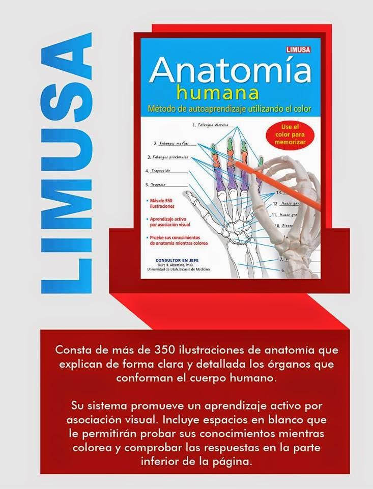 Hermosa Anatomía Humana Libro Para Colorear Patrón - Anatomía de Las ...