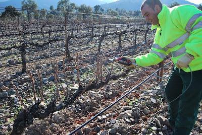viticultura en febrero