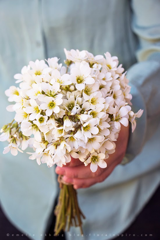 flowers basket, korg blommor, bouquet garden spring, bukett trädgård vår, vårbuketter, spring bouquet, mandelblomma, meadow saxifrage, colourful bouquet, färgstarkbukett, bouquet apple blossom, bukett äppelblom