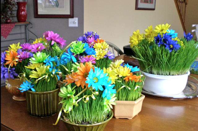 Wheatgrass Centerpieces