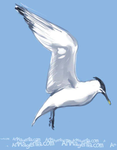 Sandwich Tern is a bird painting by illustrator Artmagenta