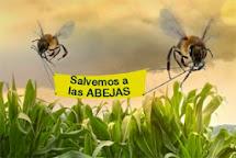nuestras abejas en peligro