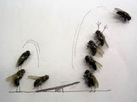 Ketika Lalat Berpose Seperti Manusia