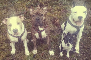 Perheemme koirat
