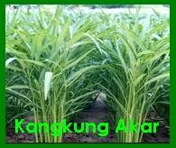 suplier sayuran jakarta