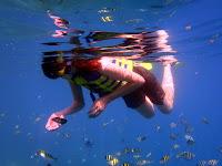 Snorkeling di Pantai Pulau Tidung