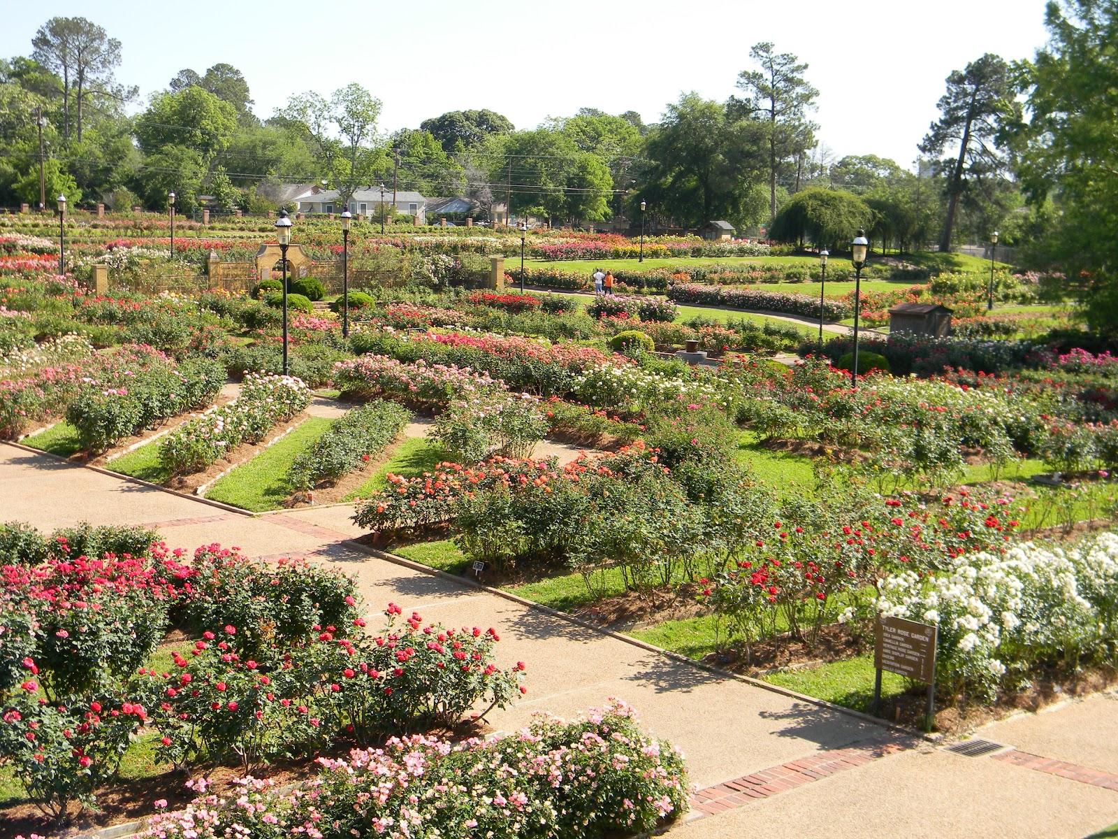 Rvfulltiminglove rose garden tyler tx for Landscape gardeners