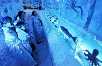 ice age aquarium