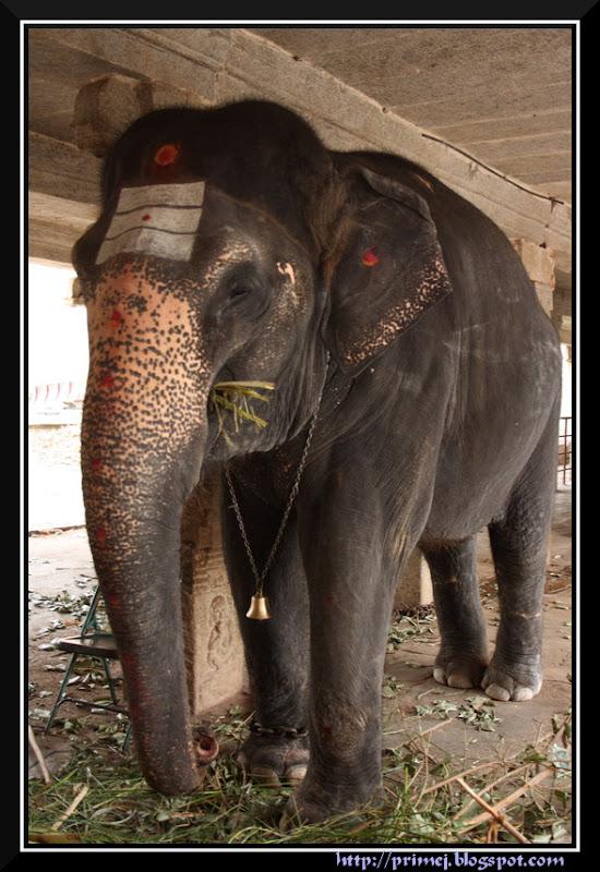 Elephant at the Virupaksha Temple