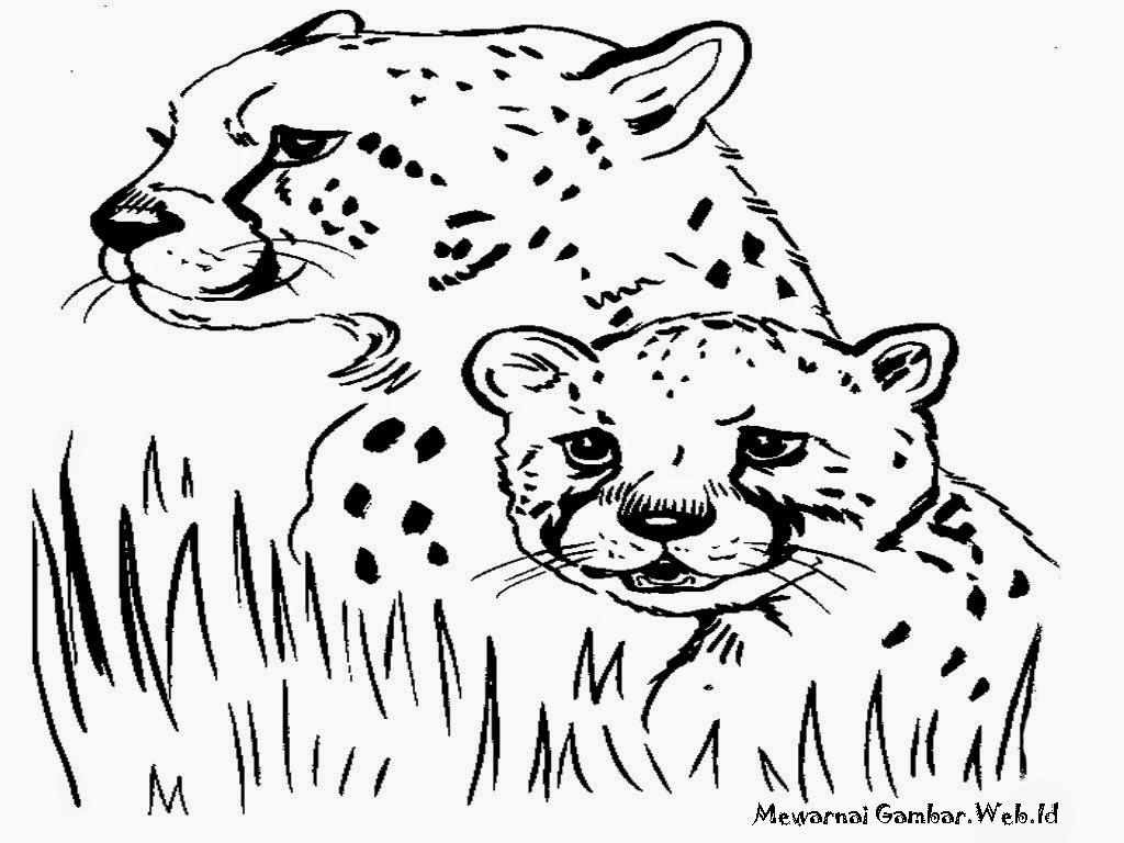 sketsa gambar cheetah