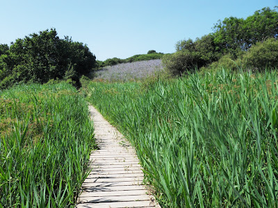 Wooden walkway on South West Coast Path